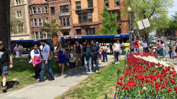 Tulip Festival Transportation